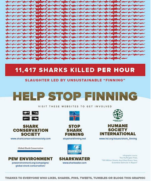shark info graph bottom