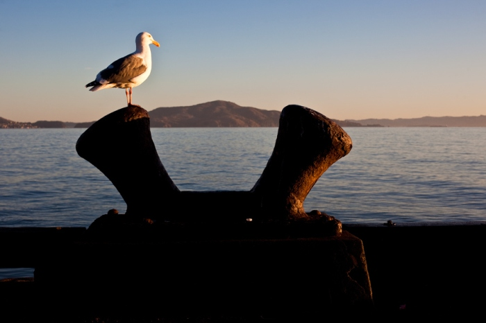 seagull san francisco